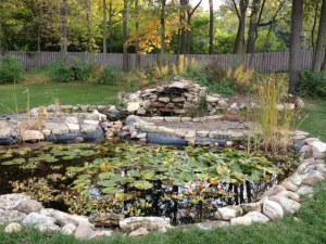 A learning pond at MVS!